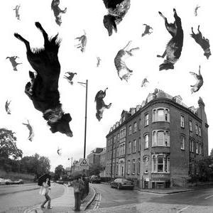 rain-cats-n-dogs(1).jpg