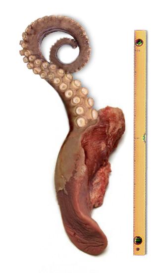 tongue.png