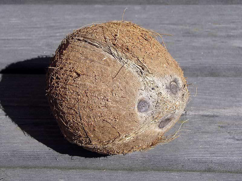 coconutface-new.jpg