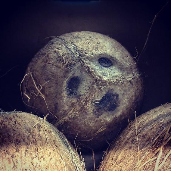 coconutface.jpg