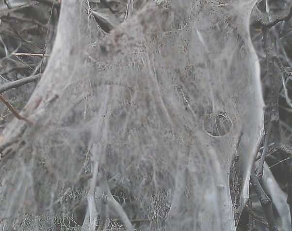 SCP-1275 на ветвях дерева