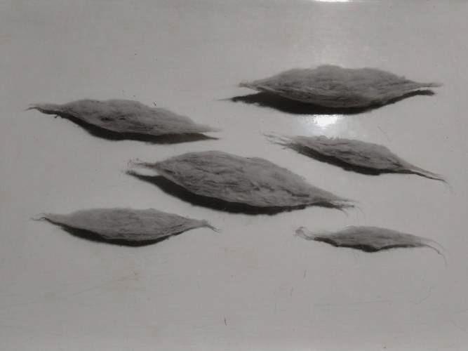 Коконы, извлечённые из SCP-1275