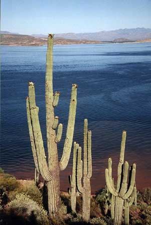 saguaro.jpg