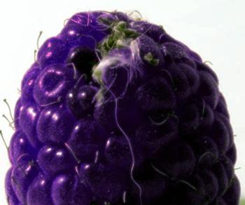 frut.png