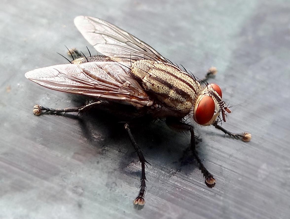 buzzing.jpg