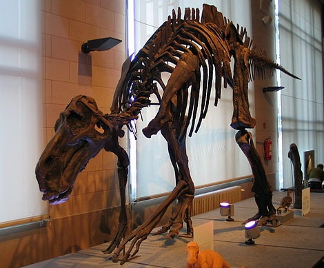 Maiasaura.jpg