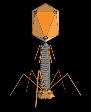 phage.png