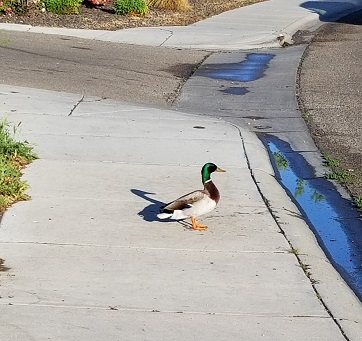 duckquestsmall.jpg