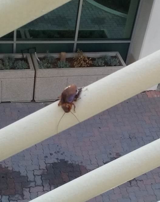 sadroach.jpg