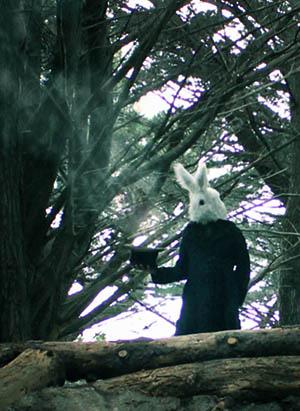 RabbitEdit.jpg