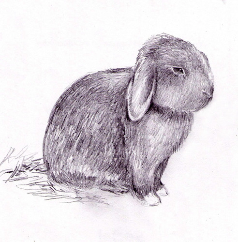 Sketch_Clovis.jpg