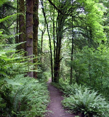 trail.jpeg